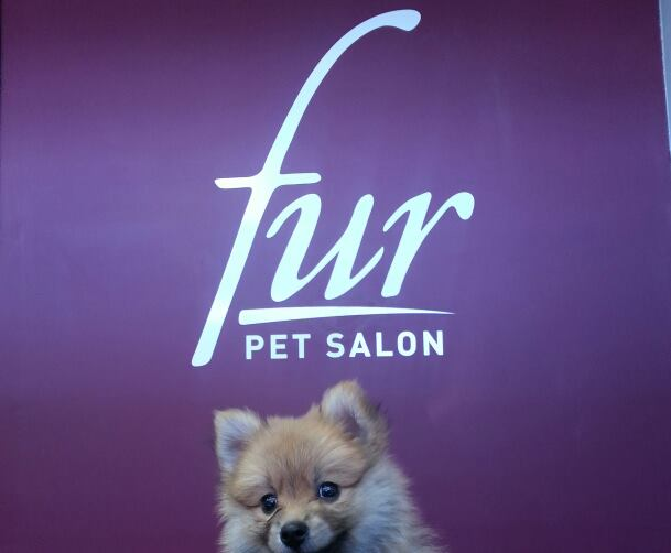 Fur Pet Salon